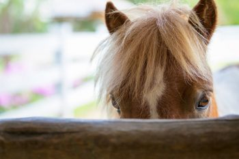 "Hold Your Horses: Privilege Protects Plaintiff–Lawyer's ""Cozy Agreement"" with Plaintiff's Treating Physician"
